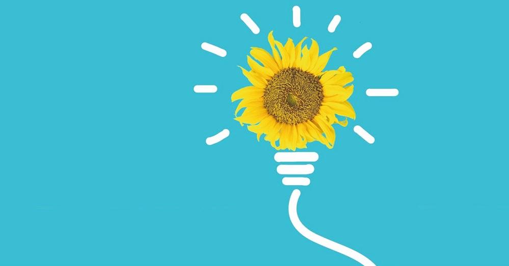 Innovative sunflower lecithin